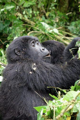 Uganda 2018 (352)